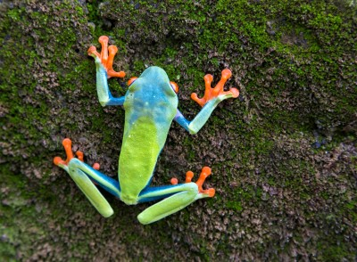 shutterstock-frog-v2